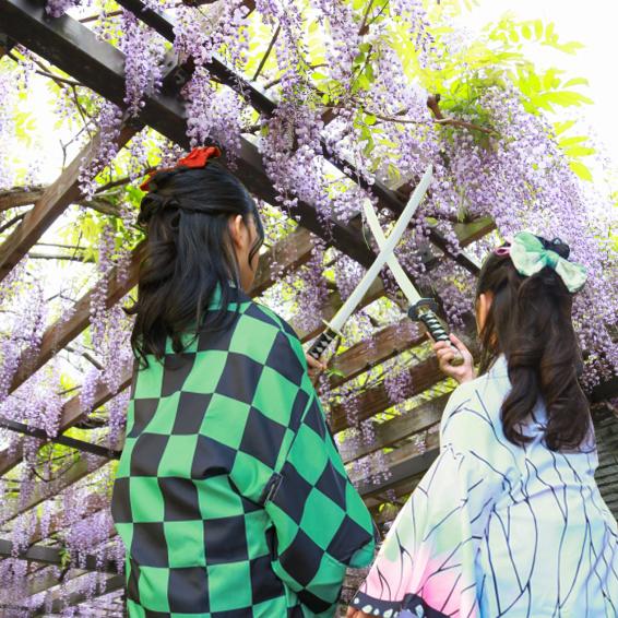 藤の花と記念日フォト撮影会
